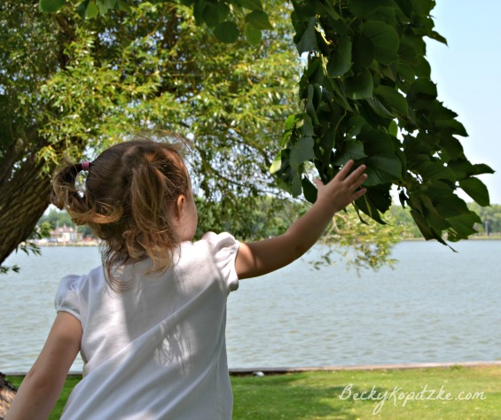 Summer-lake-tree