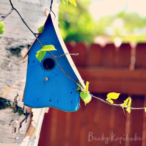Birdhouse-blue
